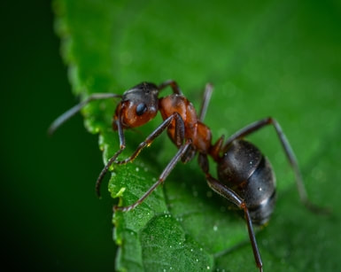 D-I-Y Ant treatment